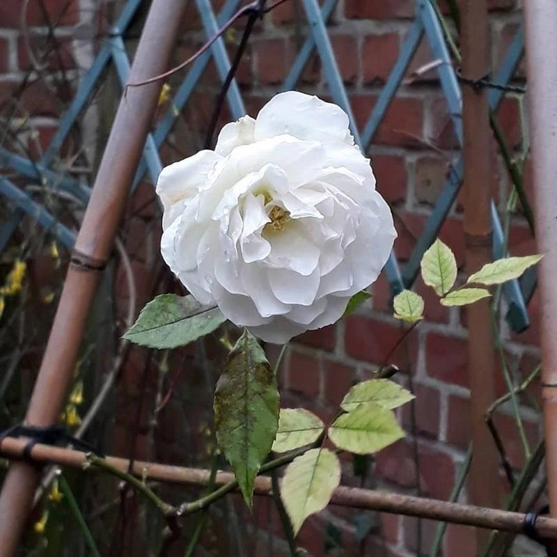 Jardin d'hiver chez Ninie Rose_d10
