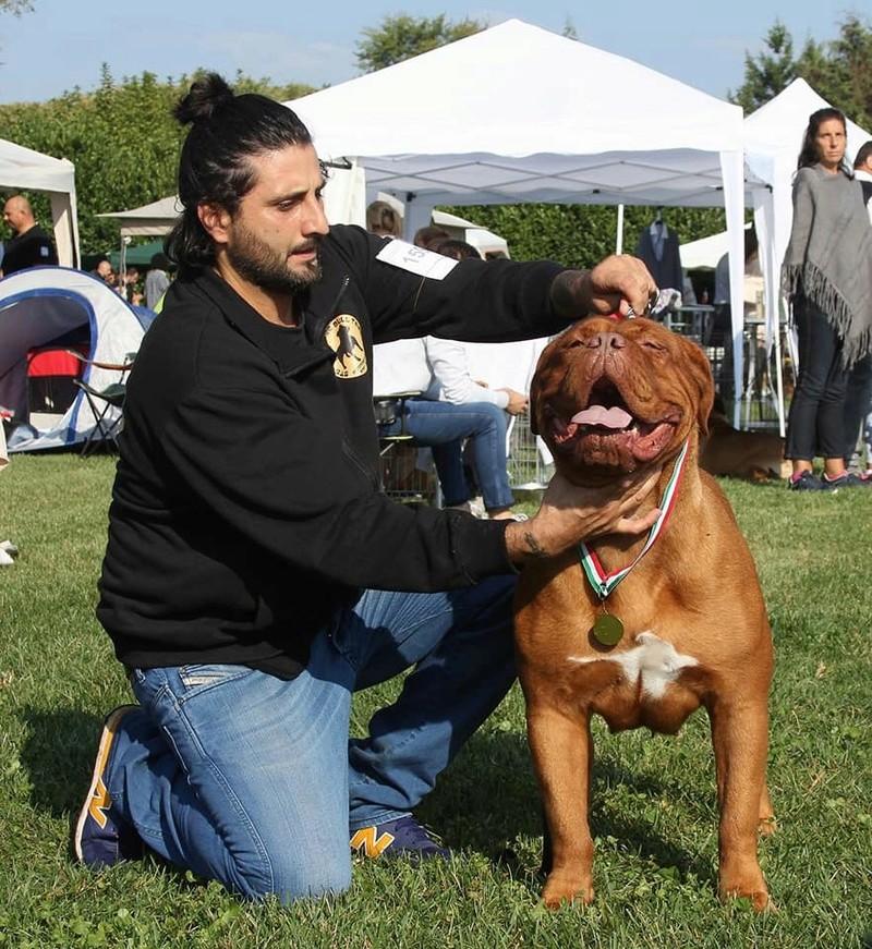 DOG'S - LAND ALMA 21767910