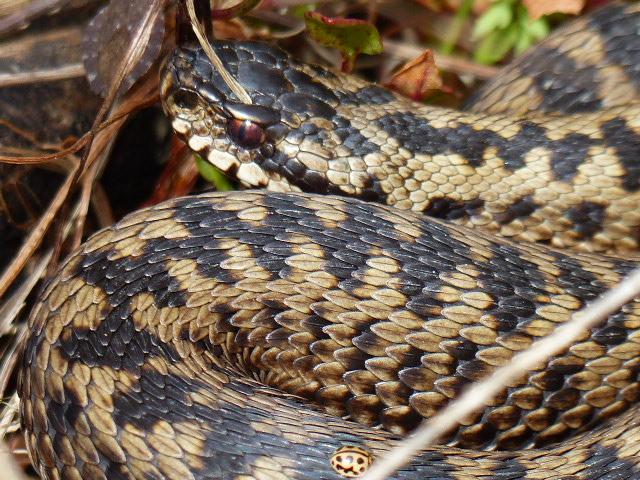 sortie des reptiles P1160315