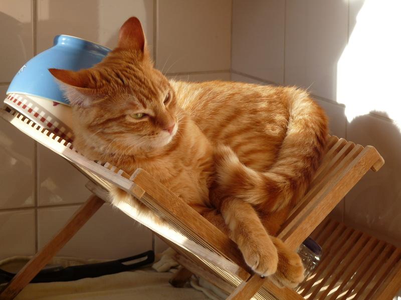 j ' adore mon chat !!! - Page 14 P1060110