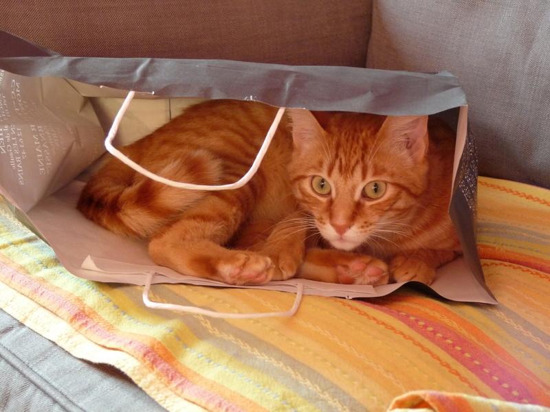 j ' adore mon chat !!! - Page 15 P1060312