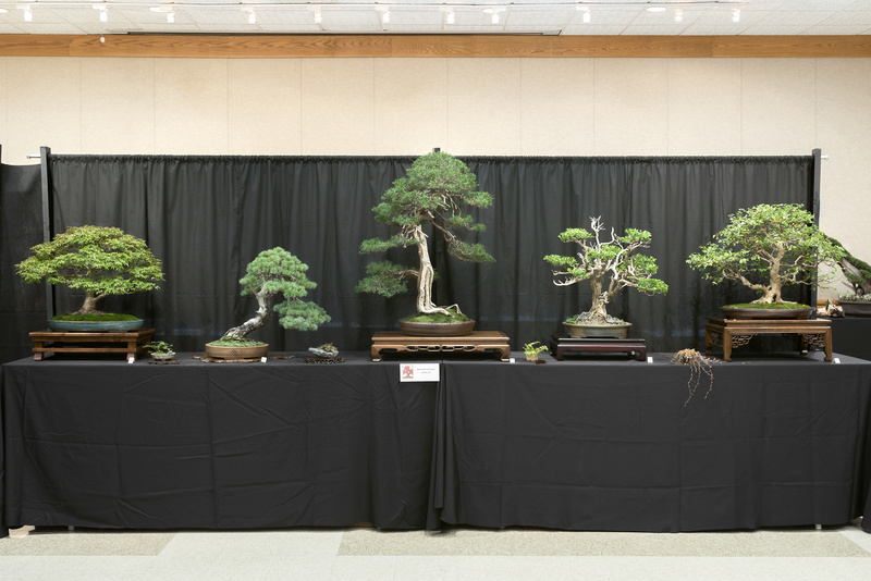 Carolina Bonsai Expo 2017 Atlant10