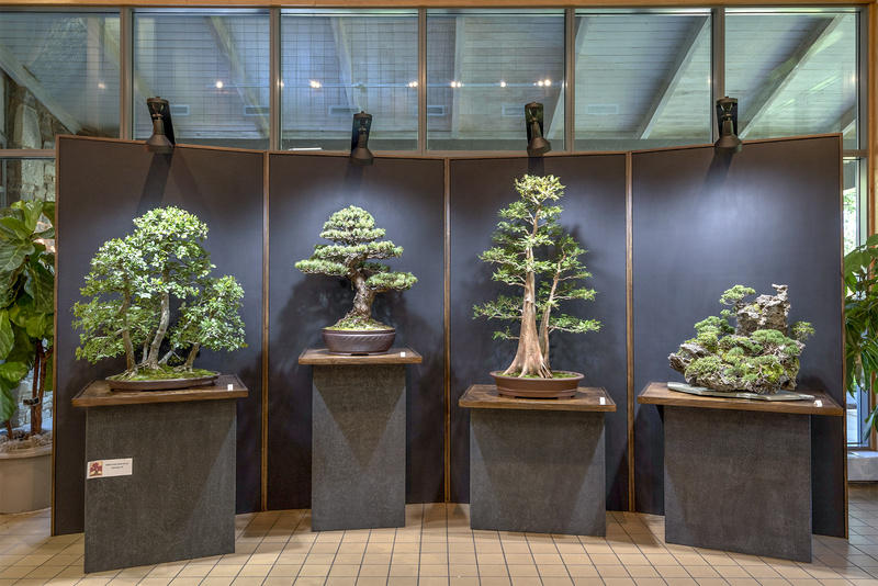 Carolina Bonsai Expo 2017 Black_10