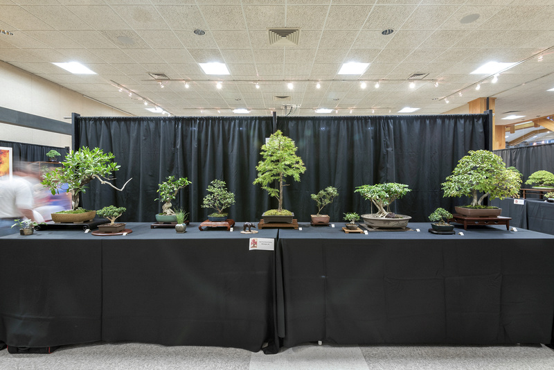 Carolina Bonsai Expo 2017 Cape_f10