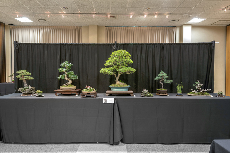 Carolina Bonsai Expo 2017 Hinoki10