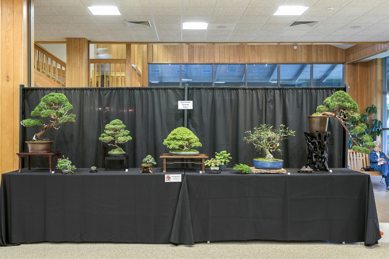 Carolina Bonsai Expo 2017 Mid-ap10