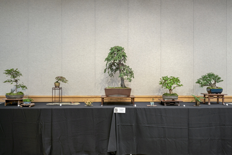 Carolina Bonsai Expo 2017 Piedmo10