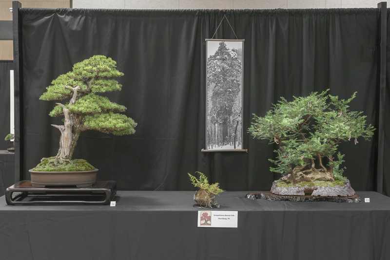 Carolina Bonsai Expo 2017 Susque10