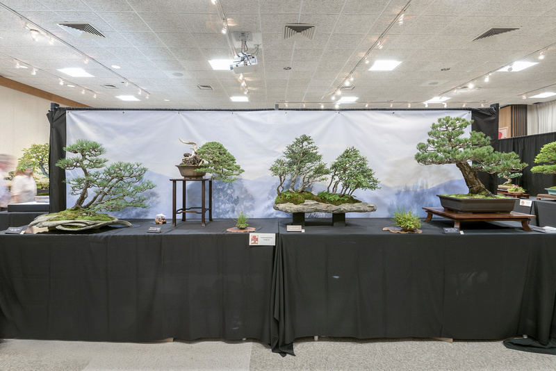 Carolina Bonsai Expo 2017 Triang10