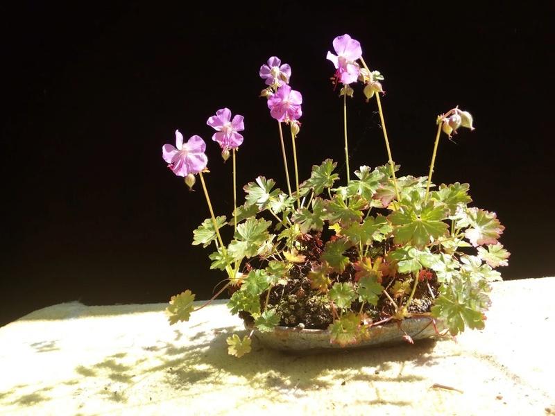 Les plantes d'accompagnement de MB Img_2118