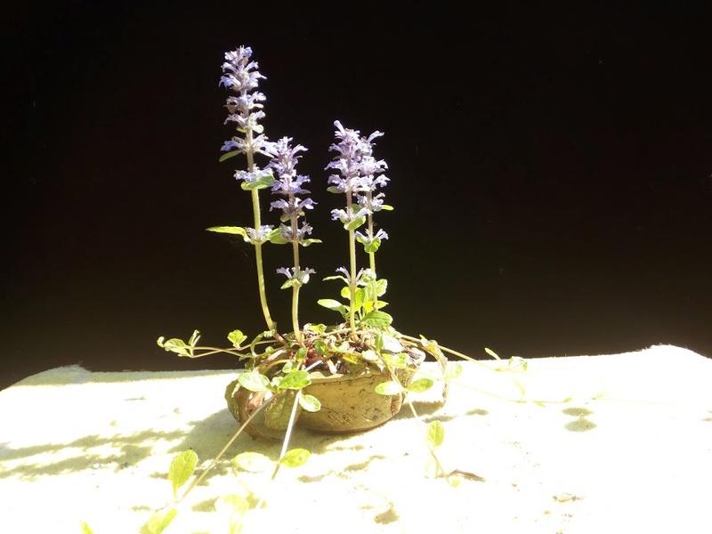 Les plantes d'accompagnement de MB Img_2119
