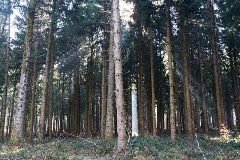 L'ancrage - trop souvent négligé Forest10