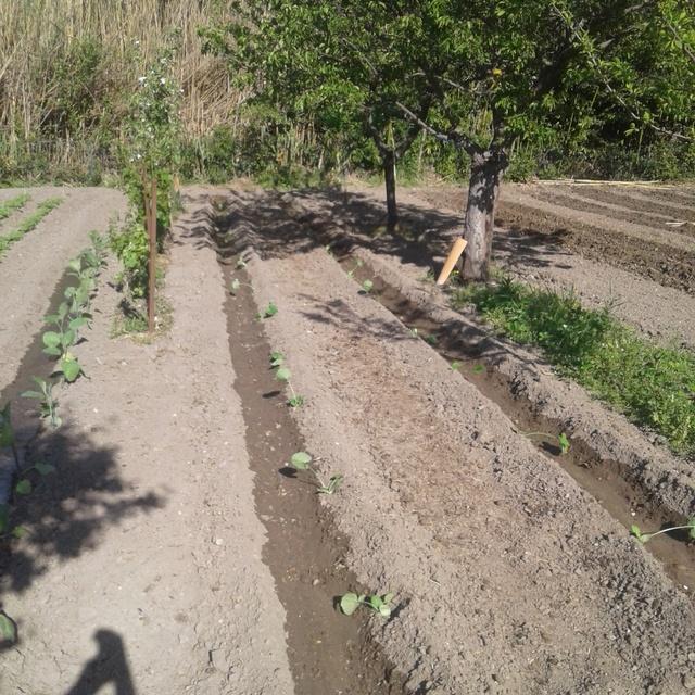 le jardin demarre juste Portab10
