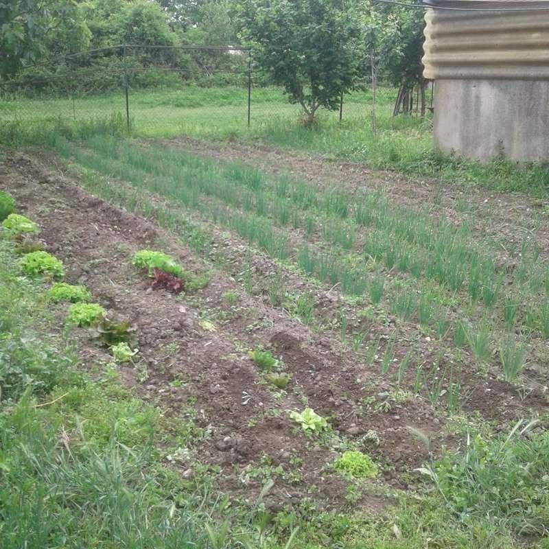 le jardin demarre juste Portab19