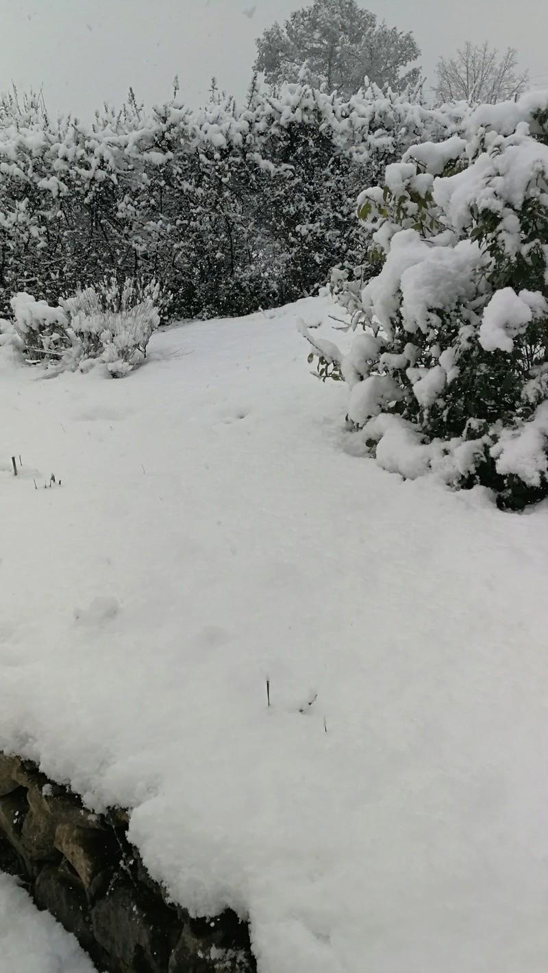 Neige dans le Var Img_2012