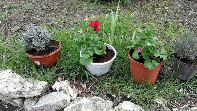 Maison et jardin, changement et évolution Img_2045