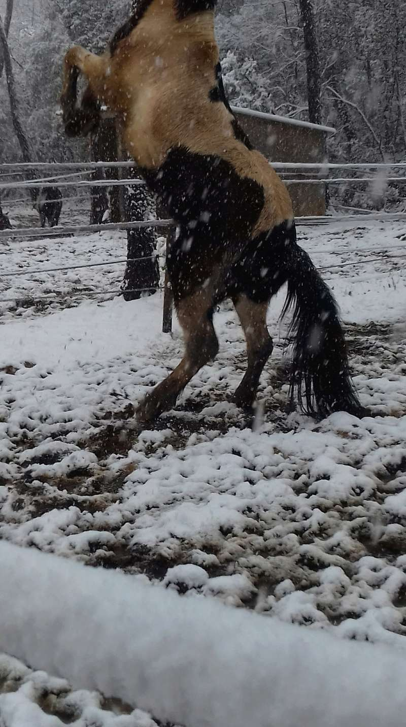 Neige dans le Var Receiv19
