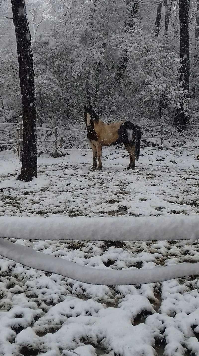 Neige dans le Var Receiv20
