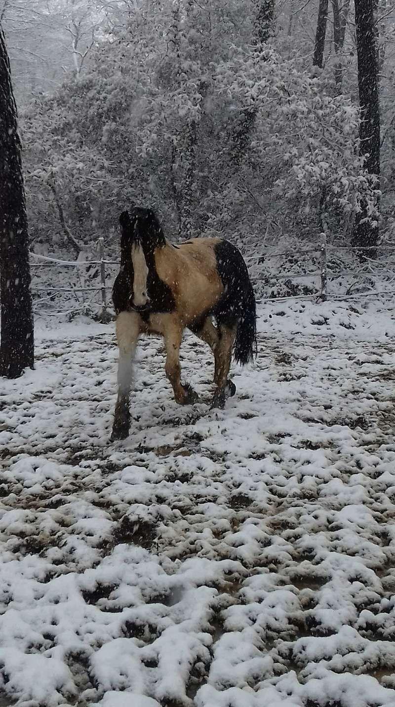 Neige dans le Var Receiv22
