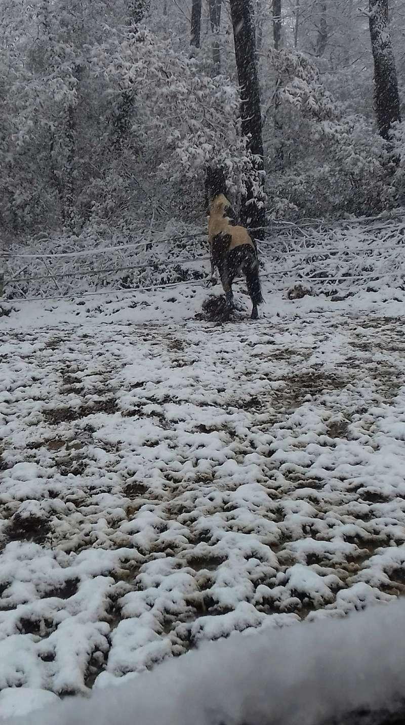 Neige dans le Var Receiv23