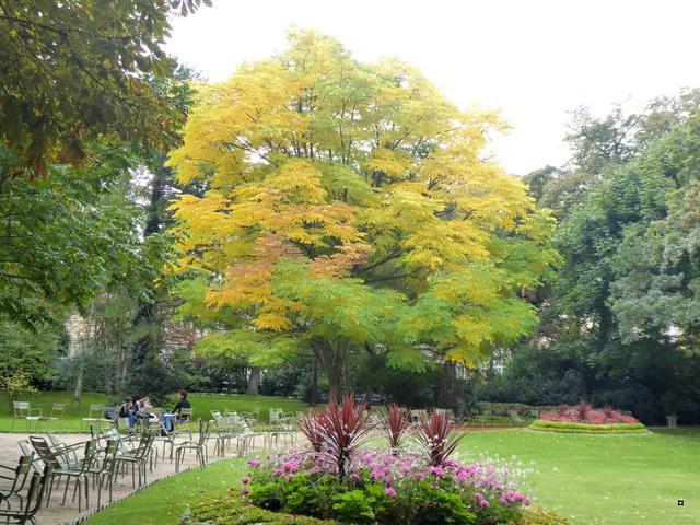 Choses vues dans le jardin du Luxembourg, à Paris - Page 5 P1000711