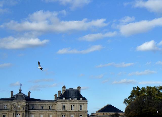 Choses vues dans le jardin du Luxembourg, à Paris - Page 5 P1000818