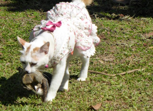 La chatte et l'écureuil  P1000830