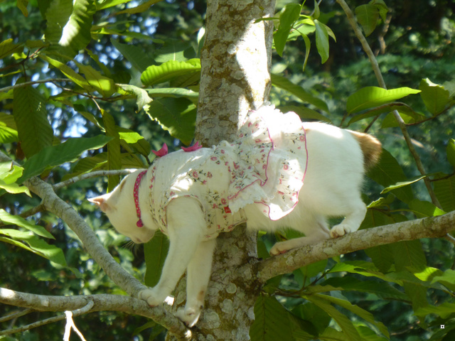La chatte et l'écureuil  P1000833