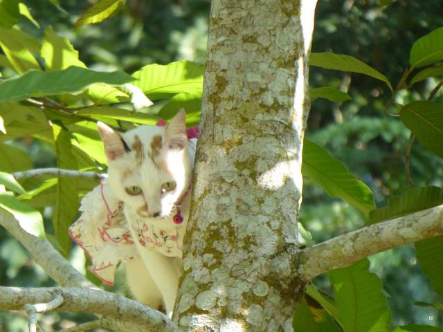 La chatte et l'écureuil  P1000834