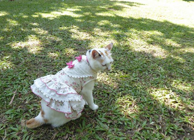 La chatte et l'écureuil  P1000835