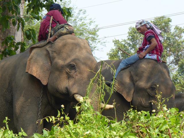 fête des éléphants P1020310