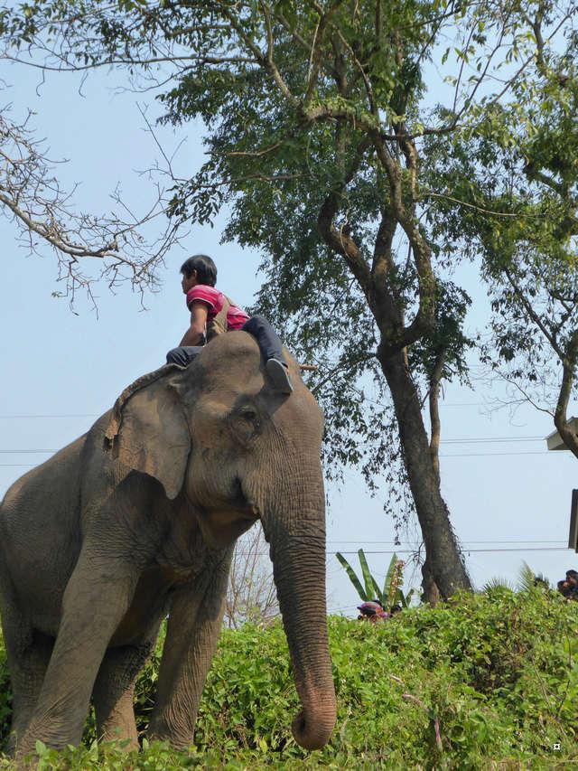 fête des éléphants P1020311