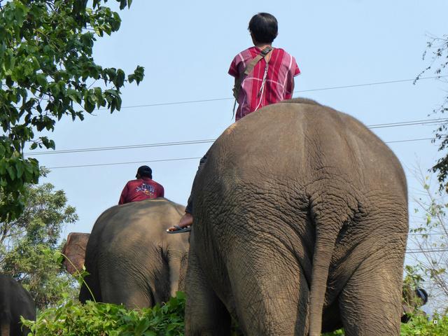 fête des éléphants P1020313