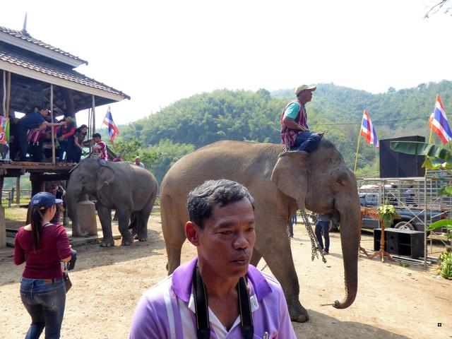 fête des éléphants P1020314