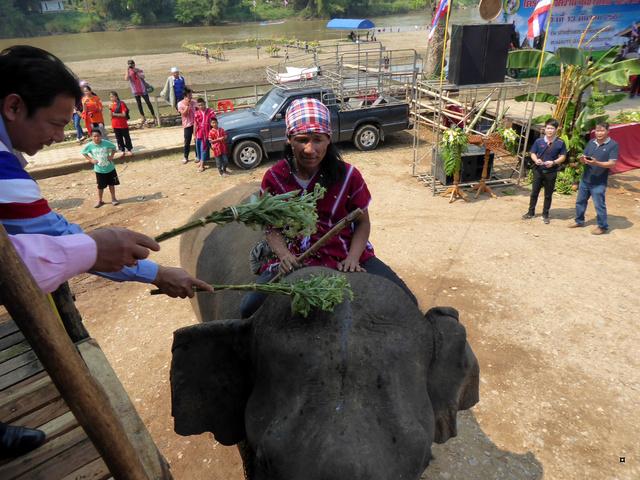 fête des éléphants P1020315