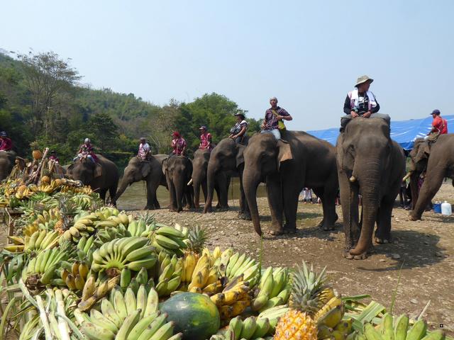 fête des éléphants P1020316