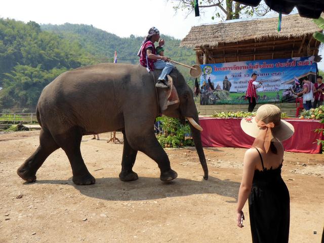fête des éléphants P1020317