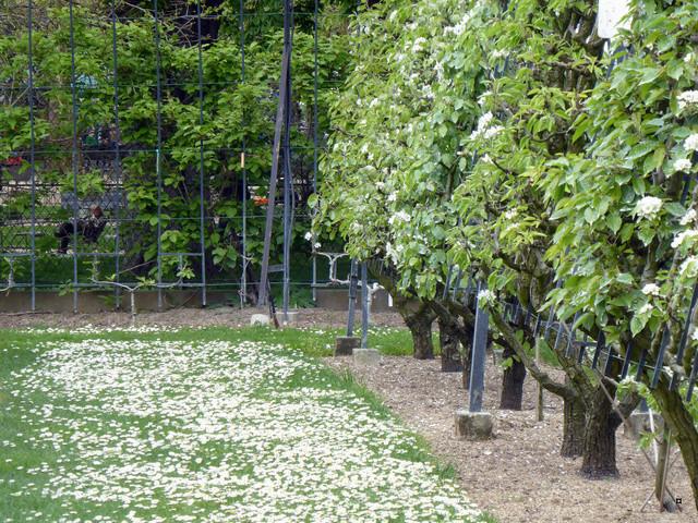 Choses vues dans le jardin du Luxembourg, à Paris - Page 6 P1020430