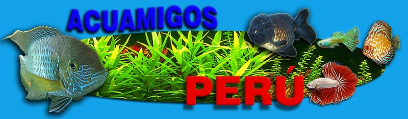 Acuamigos Peru