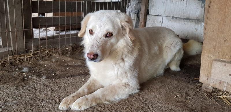 BALANUCH, mâle croisé berger sauvé de Pallady, né en 2009 parrainé par Nathalie Gamblin-SC-R-SOS- - Page 2 Balanu15