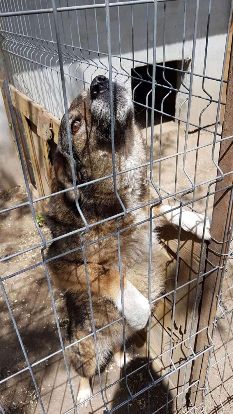 TIPPI - Très jolie femelle X berger poils mi-longs - née en 2009 - parrainée par Edni94 - R-SC- SOS - Page 3 Img-2048
