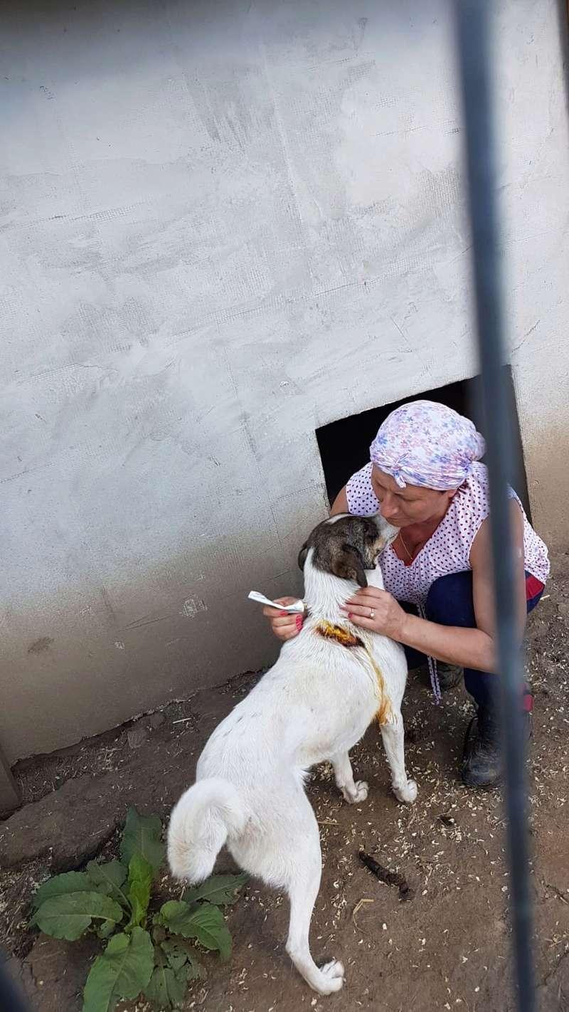 IRIS, née en 2015 - sauvée de la rue - Parrainée par Perdita -  OANA -SC-R-SOS- Img-2063
