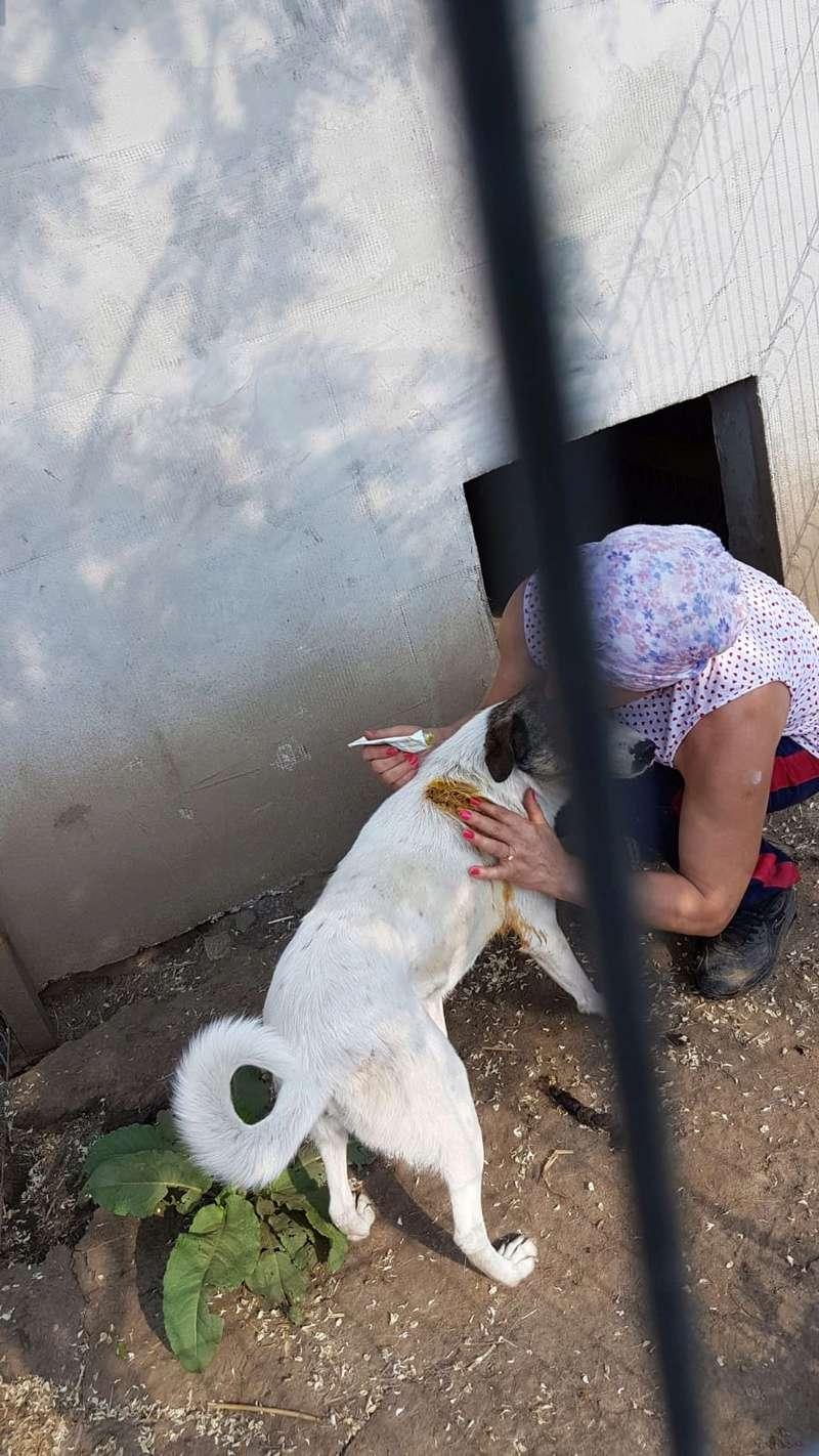 IRIS, née en 2015 - sauvée de la rue - Parrainée par Perdita -  OANA -SC-R-SOS- Img-2064