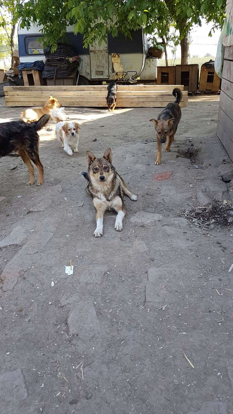 taliya - TALIYA -NEE LE 10/09/2017, soeur de Nami et Ouzo, trouvée dans le rue par Lenuta-(EN FA dept 42)- Marrainée par Karst -R-SOS-30MA Img-2119