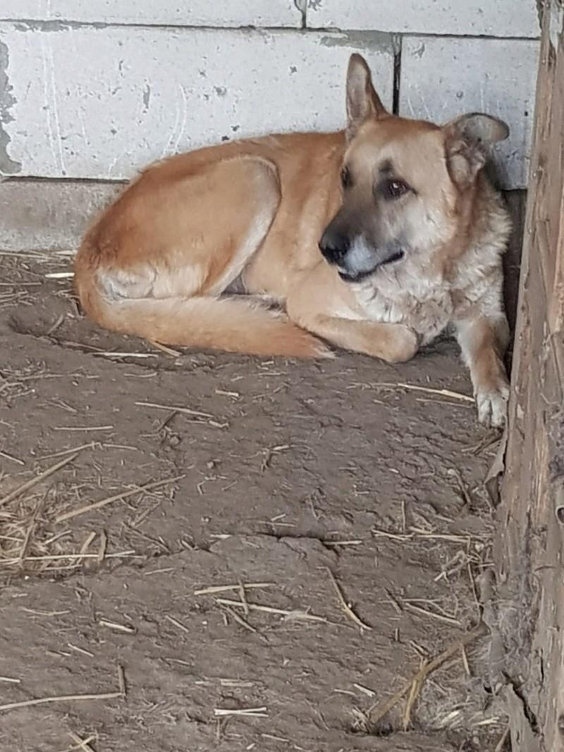 IPSY, née en 2008 sauvée de Mihailesti le 16 Avril 2018 - marrainée par Hashleyalex-R-SC-SOS Ipsy_410