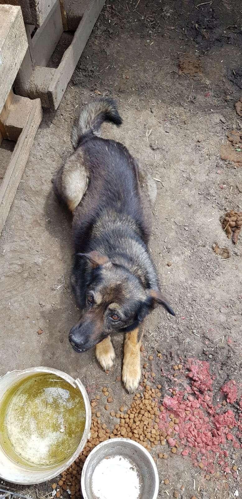 TINNA,  née en 2012 trouvée dans la rue par Lenuta - marrainée par lilirez02 -R-SC Tinna_31