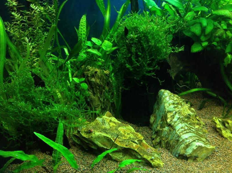 Demarrage d'un juwel rio 450 orienté australien Image13