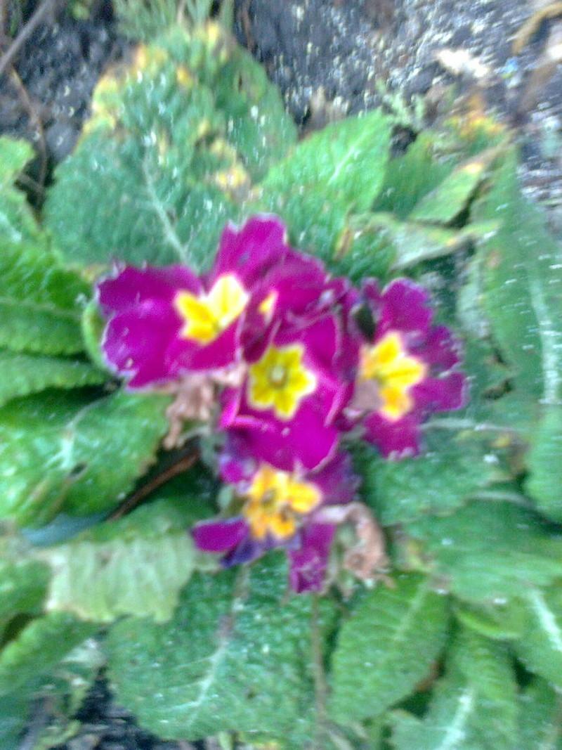 mitten im Winter Foto0516