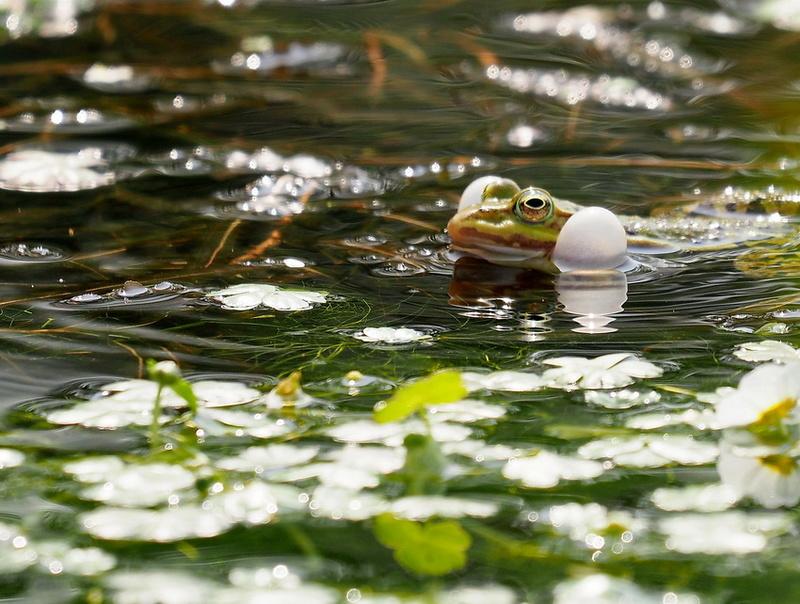 Atelier Macro au Lac de Bambois le samedi 21 avril: les photos - Page 2 P4212311
