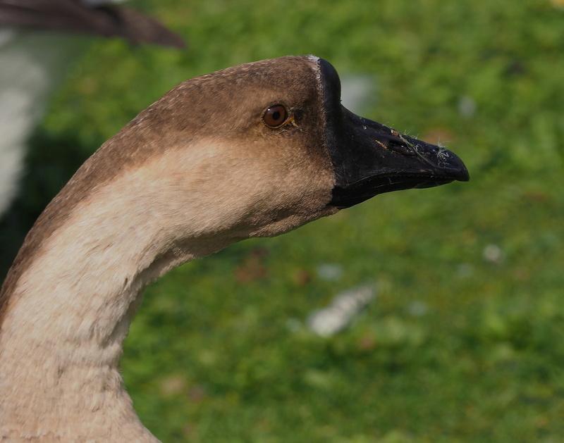 Photos d'oiseaux. P9033813
